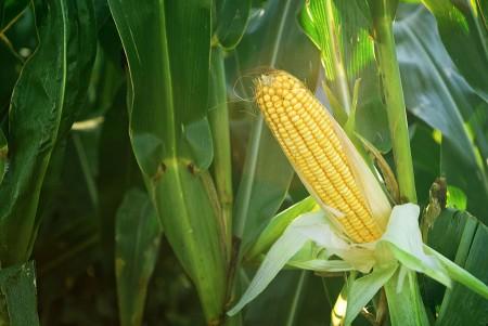 crop insurance - Bothun Insurance Agency