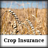 crop insurance - Bothun Insurance
