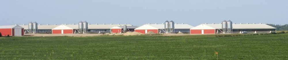 ranch-hog-farm-bothun-insurance